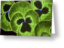 Lime Green Pansies Greeting Card