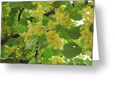 Lime Trees In Bloom  Greeting Card