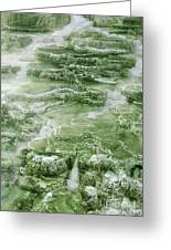 Limestone Detail Minerva Springs Yellowstone National Park Greeting Card