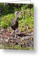 Limpkin And Apple Snails Greeting Card