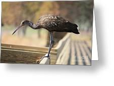Limpkin On The Boardwalk Greeting Card