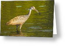 Limpkin With A Snack Greeting Card
