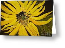Linda's Arizona Sunflower 2 Greeting Card