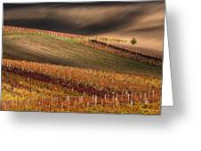 Line And Vine Greeting Card