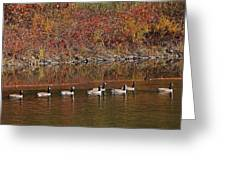 Line Of Geese On The Quinapoxet River Greeting Card