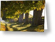 Line Of Maple Trees Along Rural Road In Greeting Card