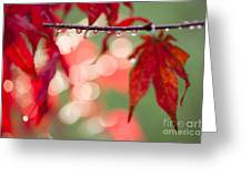 Line Of Reflections Greeting Card by Anne Gilbert