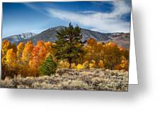 Line Of Trees At Lake Lundy Greeting Card