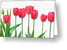 Line Of Tulips Greeting Card
