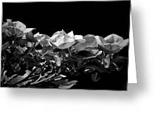 Linear Dogwood  Greeting Card