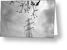 Lines In Black And White Greeting Card