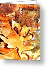 Lines Of Fall Greeting Card