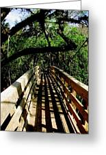 Lines Of Shade Greeting Card by Will Boutin Photos