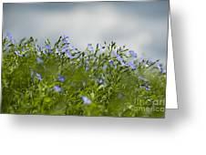 Linseed Greeting Card