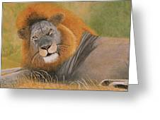 Lion At Rest Greeting Card