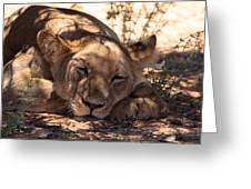 Lion Close Up Greeting Card