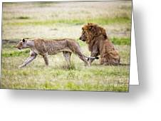 Lion Couple Greeting Card