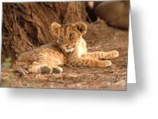 Lion Cub Panthera Leo Greeting Card