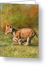 Lion Cub Running Greeting Card