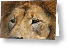 Lion Eyes Greeting Card