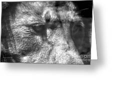 Lion Eyes Greeting Card