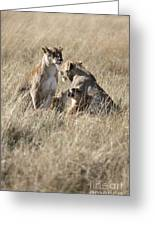 Lion Family Greeting Card