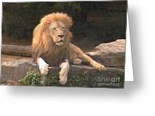 Lion Hanging Out Two Greeting Card