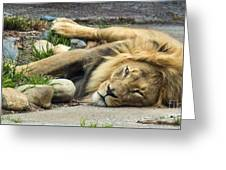 Lion I Greeting Card