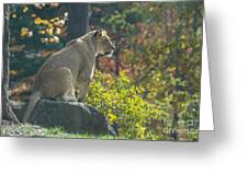 Lion In Autumn Greeting Card