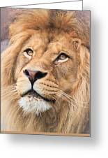 Lion In Deep Thought Greeting Card