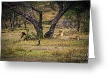 Lion In The Dog House Greeting Card