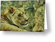 Lion Looking Back Greeting Card