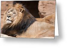 Lion Portrait Of The King Of Beasts Greeting Card