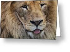 Lion Portrait Panting Greeting Card