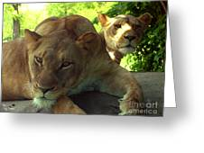 Lioness-00104 Greeting Card
