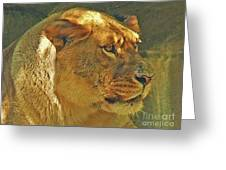 Lioness 2012 Greeting Card