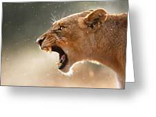 Lioness Displaying Dangerous Teeth In A Rainstorm Greeting Card