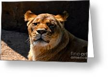 Lioness Hey Are You Looking At Me Greeting Card