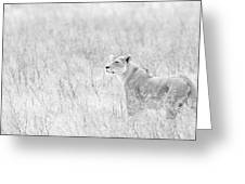 Lioness In Black And White Greeting Card