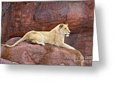 Lioness On A Red Rock Greeting Card