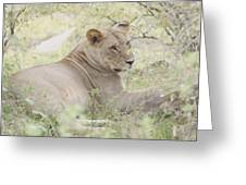 Lioness Relaxing Greeting Card