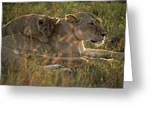 Lioness With Cub Greeting Card