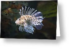 Lionfish - Gatlinburg Tn Ripleys Aquarium Greeting Card by Dave Allen
