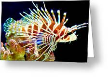 Lionfish 1 Greeting Card