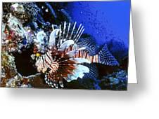 Lionfish 4 Greeting Card