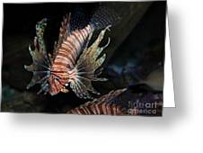 Lionfish 5d24143 Greeting Card by Wingsdomain Art and Photography