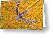 Lionfish Against Yellow Fan Coral Greeting Card