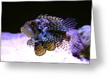 Lionfish Dendriochrius Barberi Greeting Card by Karon Melillo DeVega