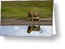 Lions   #1504 Greeting Card