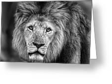Lion's Eyes Greeting Card